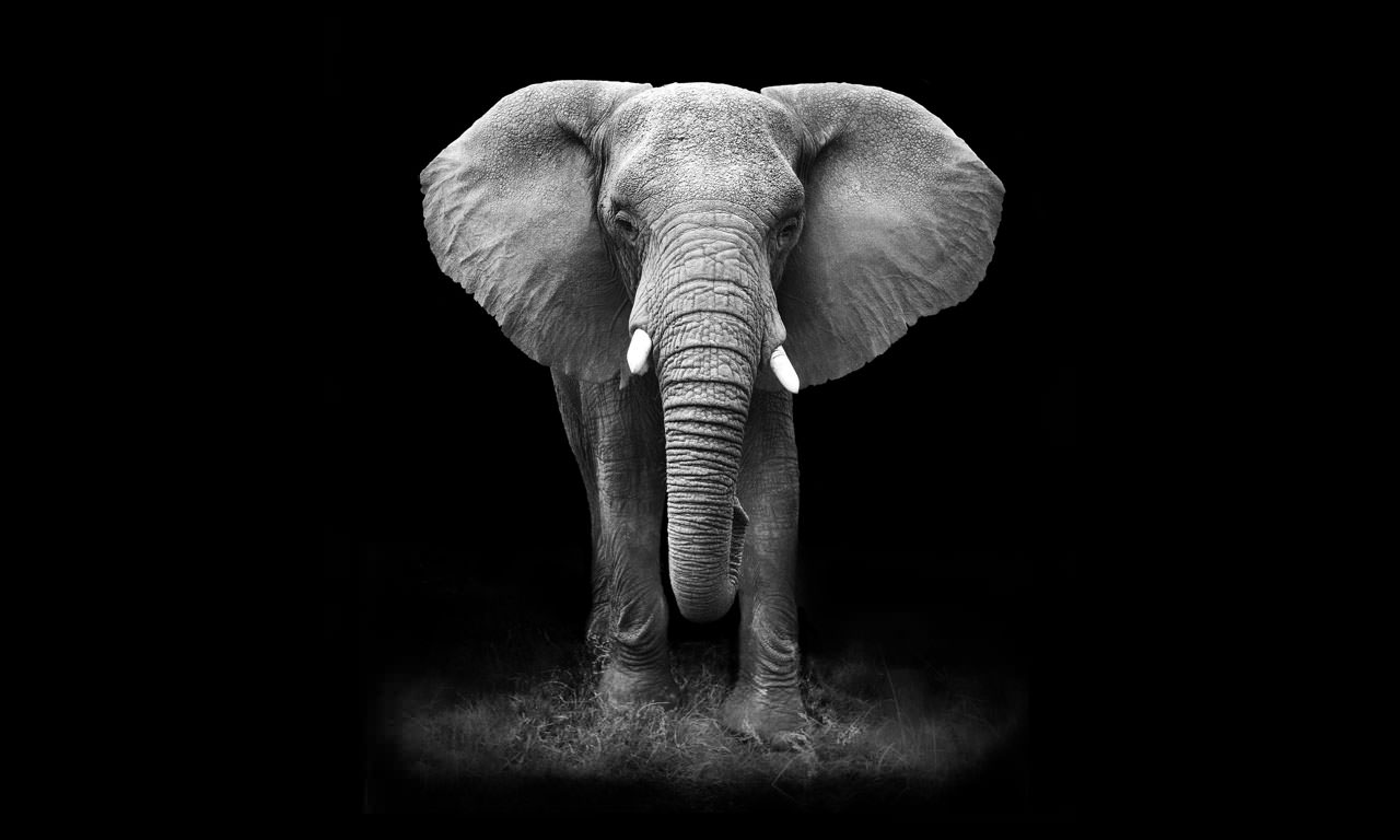 Elephant-on-dark-background